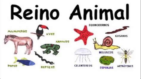 imagenes reino animal reinos de la naturaleza reinos de la naturaleza