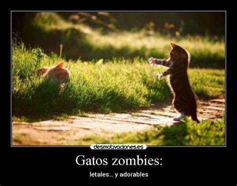 imagenes zombies graciosos gatos zombies desmotivaciones