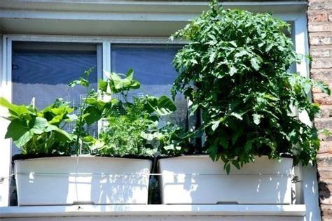 window box garden vegetables kitchen window box gardens