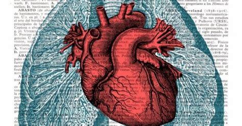 imagenes reales corazon humano 12 datos sorprendentes del coraz 243 n humano que ni te imaginabas