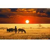 YouWall  Africa Sunset Wallpaper Wallpaperwallpapers