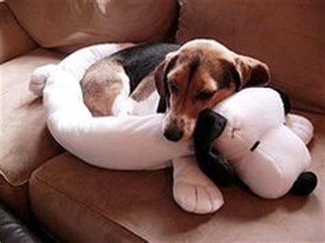 snoopy dog bed snoopy dog bed oh my god that is sooooo cute