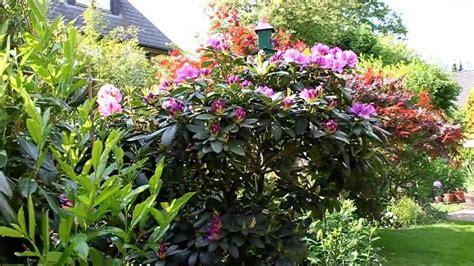 Dt 1c Watches rhododendron radikal runter schneiden newwonder555