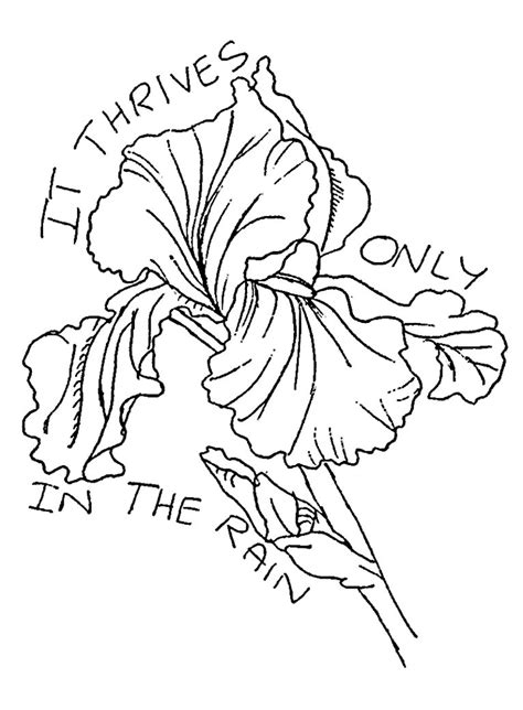 Iris Outline by Iris Flower Drawing Www Pixshark Images Galleries With A Bite
