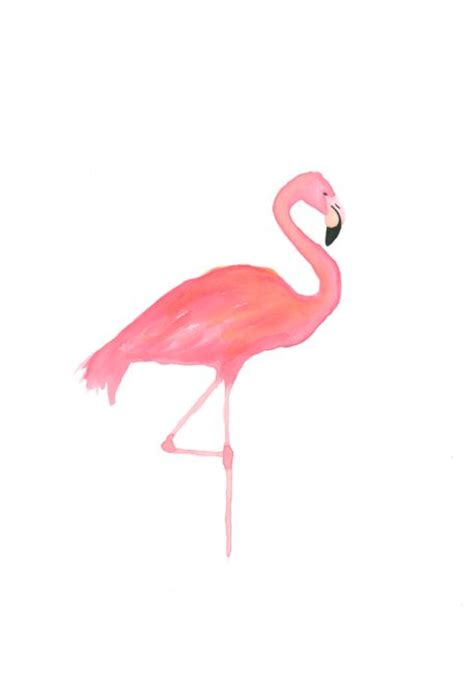 60 best flamingoes images on pinterest