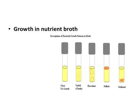 growth pattern en francais culture characteristic of bacteria
