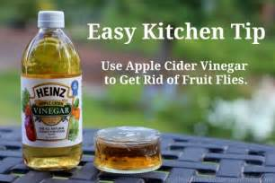 easy kitchen tips how to get rid of fruit flies one