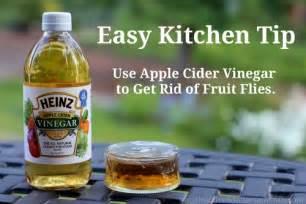 get rid of fruit flies with vinegar money saving 174