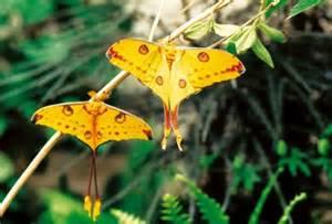 jardin des papillons papillons exotiques vivants 224