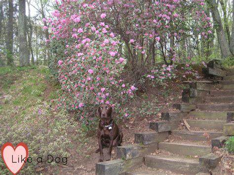 ticks in backyard wellness wednesday fleas and ticks heart like a dog