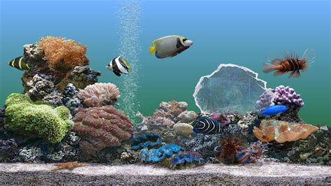 serenescreen marine aquarium download new download scarica serenescreen marine aquarium gratis