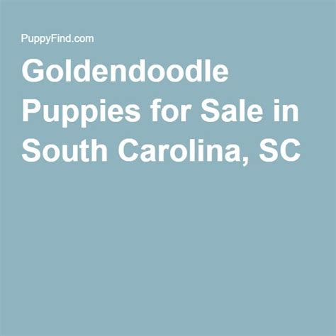 goldendoodle puppies for sale in sc goldendoodle puppies for sale in south carolina sc puppies