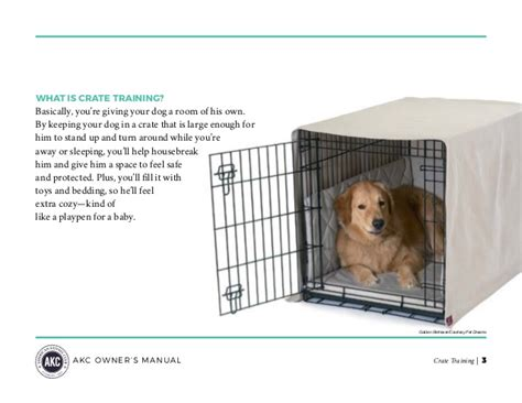 best crate for golden retriever guide to crate your