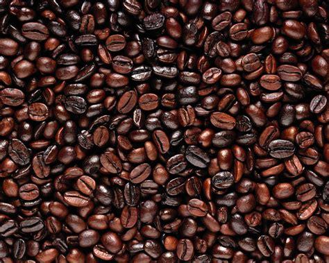 Biji Coffee richrik cafe coffee biji kopi