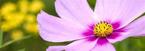 fiori di bach test kinesiologico floriterapia pratica moderna studio medico pk