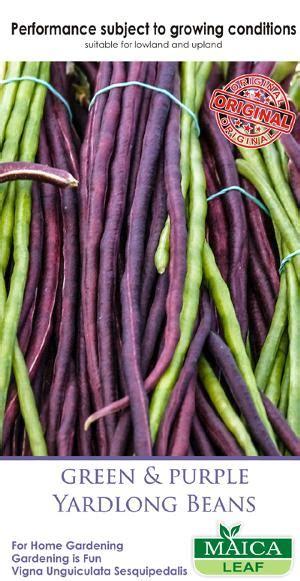 benih kacang panjang hijau ungu maica leaf