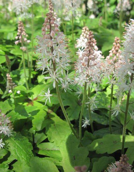 fragrant plants for shade plants for shade gardening for health