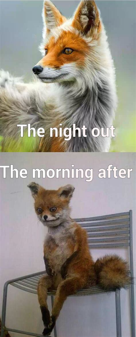 The Morning After Meme - the night out vs the morning after quickmeme