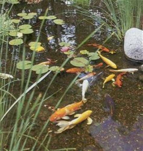 Lu Untuk Akuarium kolam ikan hias