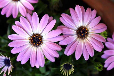Garten Blumen by Gartenblumen Purpleplant