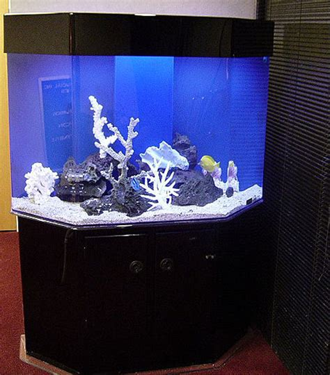 Acrylic Aquarium Photo Gallery Of Acrylic Fish Tanks And Aquariums With Cabinetry