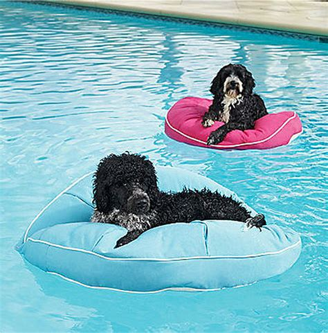 floating dog bed floating doggy beds would your pooch perch on one of these