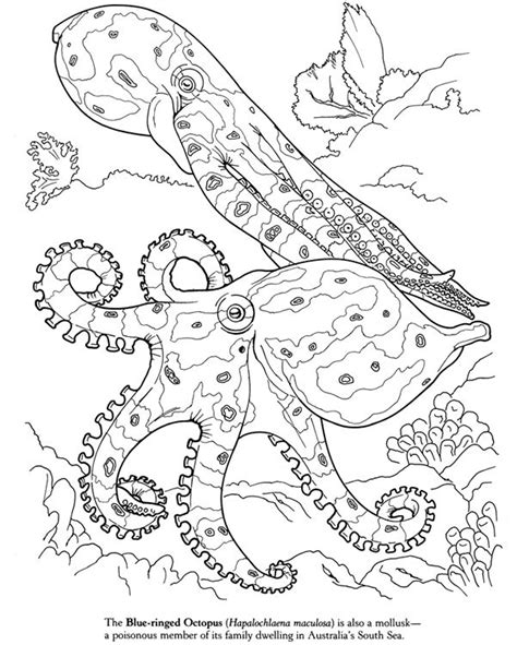 giant coloring pages for adults 916 best images about drawings on pinterest dovers