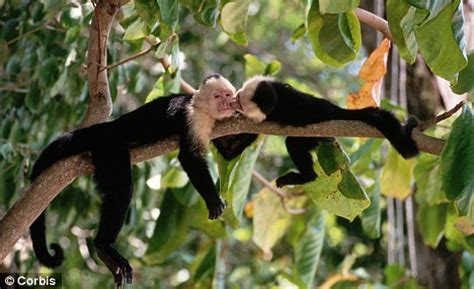 tropical forest animals and plants environmentalists exaggerated threat to tropical
