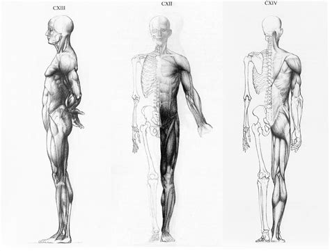 female anatomy reference by pictures
