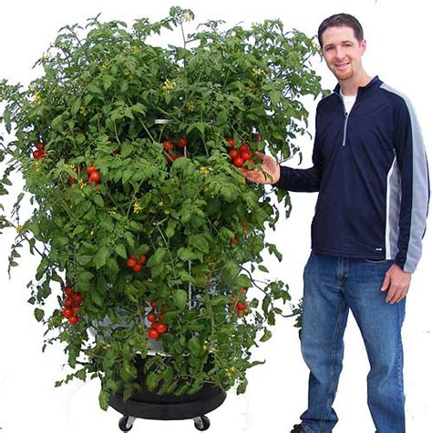 Portable Herb Garden by Alexandra S Gardens Custom Gardens Ct