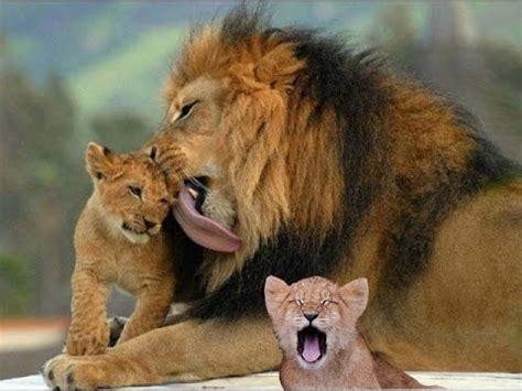 imagenes de animales naturaleza naturaleza y animales la belleza que nos rodea youtube