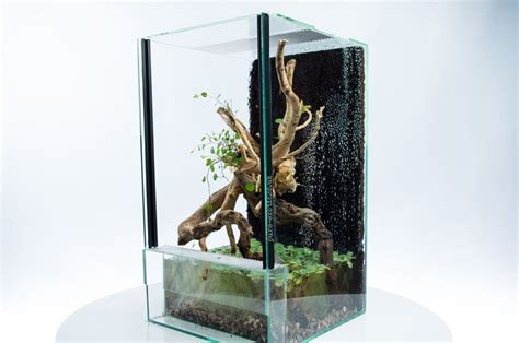 aqua terrarium designs aqua terrarium for avicularia versicolor and betta splender siamese fighting fish