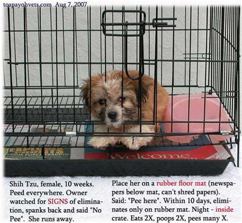 puppy poops in crate 031208asingapore toa payoh veterinary vets cat rabbits hamster veterinarian