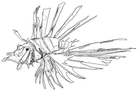 Lionfish Coloring Page Coloring Pages Lionfish Coloring Page