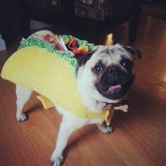 pug in taco costume creative costume ideas on 98 pins