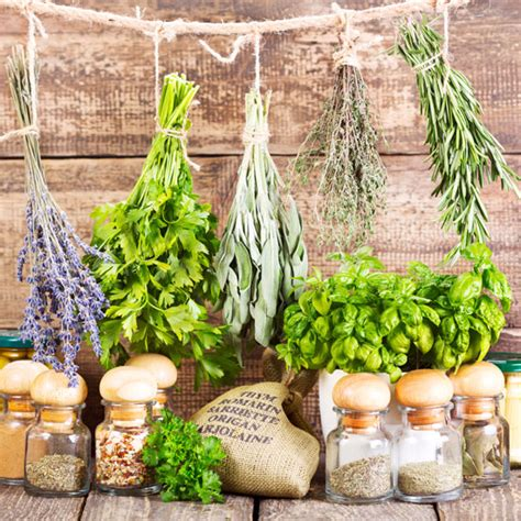 Home Herbal herbal remedies for common ailments health