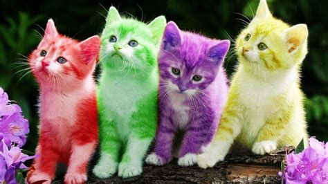 color kittens baby kitten cat colorful learning color