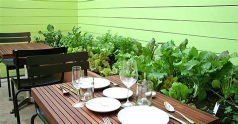 contigo's back patio with herb and vegetable garden