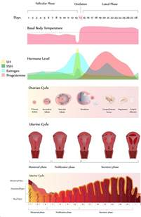 menstrual blood color abnormal uterine bleeding by dr keith reisler