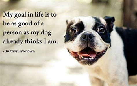 52 funny dog quotes with images good morning quote