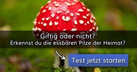 giftig oder nicht erkennst du die essbaren pilze der