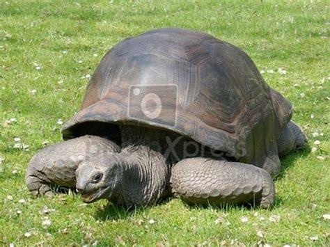 imagenes animales reptiles todos los animales reptiles imagui