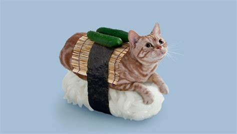 cat wallpaper rolls nekozushi an absurd combination of cats and sushi