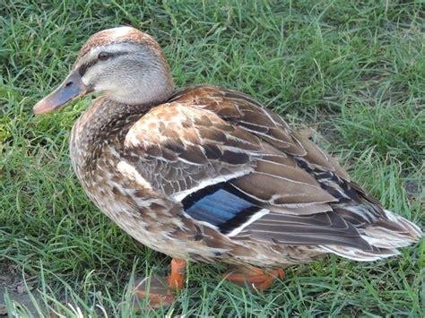 duck boat tours napier 49 best napier new zealand images on pinterest