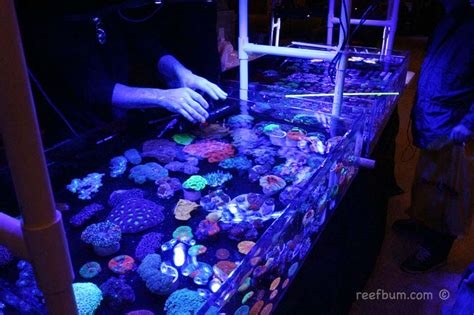 a reefbum s guide to keeping an sps reef tank a blueprint for success books reef a palooza 2016 new york reefbum