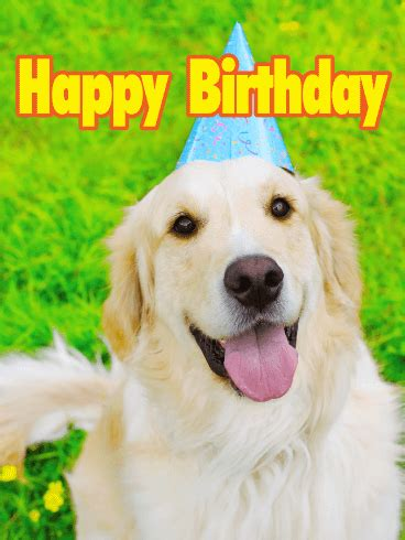golden retriever birthday ecard happy birthday cards birthday greeting cards by davia free ecards