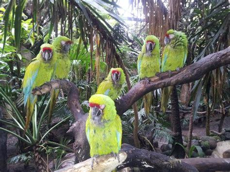entrada zoológico barranquilla viendo en el aviario picture of zoologico guadalajara