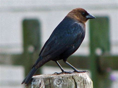 unusual strange and weird birds of north carolina