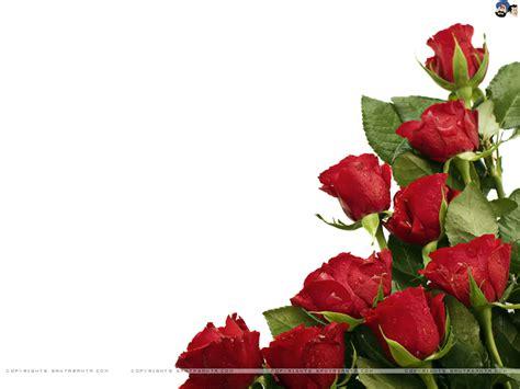 red wallpaper qige87 com red roses wallpaper qige87 com