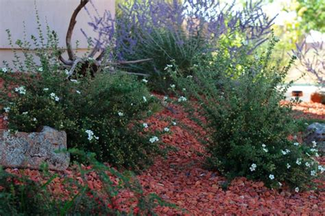 high desert landscape maintenance images